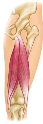 عضلات همسترینگ در پشت ران